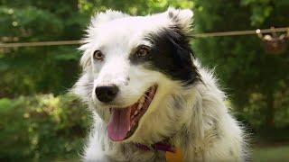 Dog Understands 1022 Words | Super Smart Animals | BBC Earth