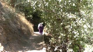 preview picture of video 'Hermon Stream (Banias) Nature Reserve in Northern Israel'