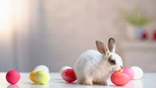 HISTORY OF | The Easter Bunny