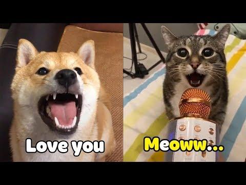 當寵物開始說起人話 可愛!-寵物短片合輯