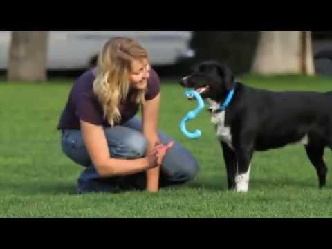 WEST PAW Zogoflex Игрушка для собак Bumi Video #2
