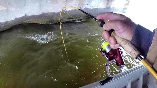 Crappie Fishing Bridges With Live Minnows