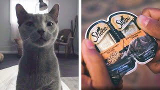 A Cat's Eye View // Presented By SHEBA®
