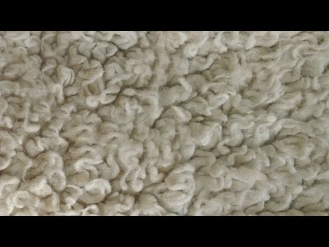 HOW TO REMOVE OR NEUTRALIZE CARPET ODORS