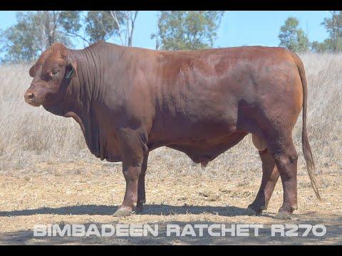 BIMBADEEN Q RATCHET R270 (P)