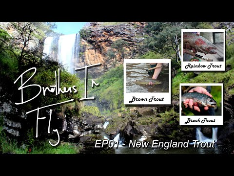 Brothers In Fly EP 01 - New England Trout