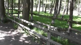 preview picture of video 'Wildgehege Moritzburg'