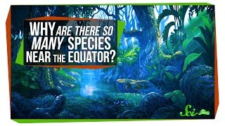 Why Are There So Many Species Near the Equator?
