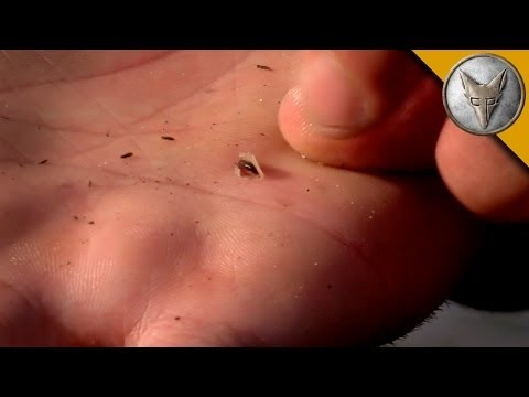 GROSS: Baby Leech Burrows Into Coyote's Hand!
