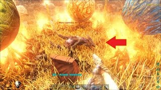 ARK: Scorched Earth #11 - Trứng Rồng đã nở ra Rồng con rồi Fan ơi, Wyvern Baby =))