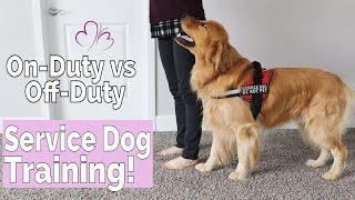 Service Dog Training Philosophy: How I Trained my Service Dog On-Duty vs Off-Duty Behaviors