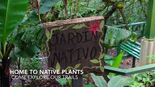 Explore the Children's Eternal Rainforest