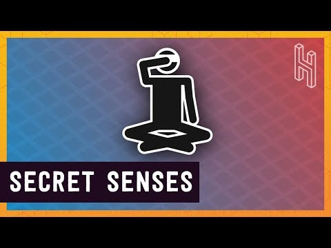 Why Humans Have More Than Five Senses