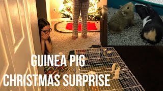 SURPRISING MY SISTER WITH A GUINEA PIG FOR CHRISTMAS | 2017