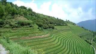 preview picture of video 'Paseando por las terrazas de arroz de Longsheng'