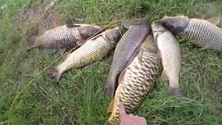 Жмых прессованный для рыбалки в москве