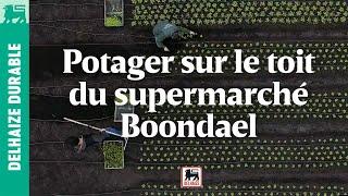 Vestaculture crée le premier potager de Delhaize sur le toit de Boondael