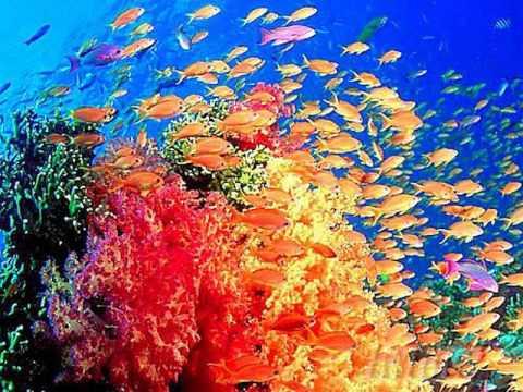 《红珊瑚·珊瑚颂》赵云卿 唱