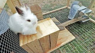Will these lionheads like their RABBIT TRACTOR?