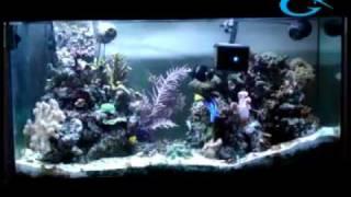 Aquagenesis International - The RoboSnail.flv