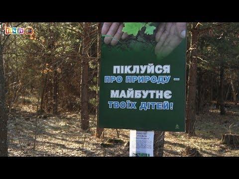 Діяльність лісового господарства Фастівщини