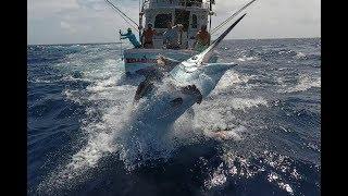 Cairns Black Marlin Fishing