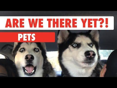 הדברים הכי חמודים שכלבים עושים בנסיעה