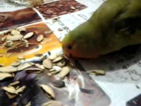 Biltritsid in trattamento di helminths