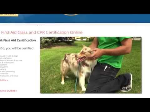 Pet Health Academy Teaches Pet First Aid Online - YouTube