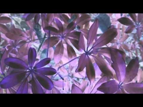 Música Leaf Off / The Cave