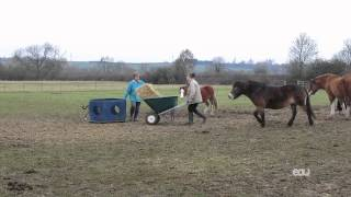 How can you stay safe while feeding hay to horses?