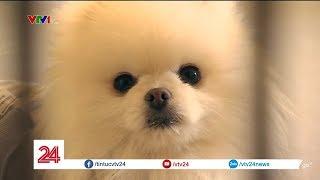 Người Hàn Quốc nuôi thú cưng thay con nhưng 'đứa trẻ' sẽ 'ra đi' trước bố, mẹ | VTV24