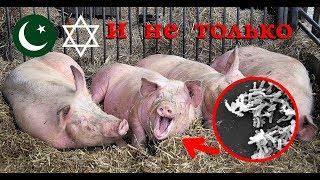 Свинина запрещено всем людям научно доказано .