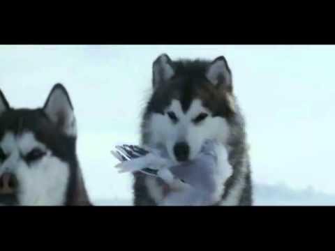 Câu chuyện cảm động về những chú chó bị bỏ lại ở Nam Cực !