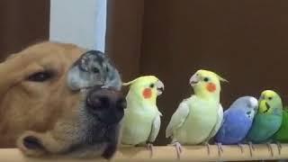 Необычная семья из животных (приколы животные, веселые видео ролики, смех, позитив)