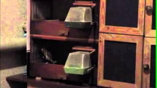 Зеленый кенар   6 мес  12. 2015 г.
