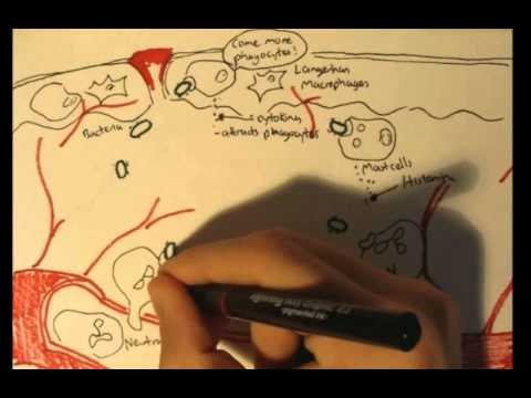 Parazitii in londra