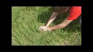 Видеоурок  - Как быстро и эффективно ловить ящериц