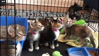 Потешный кот советуем посмотреть | Приколы до слез - Collab #175