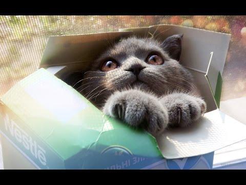 Почему ВСЕ кошки обожают коробки
