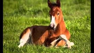jedu na koni remix