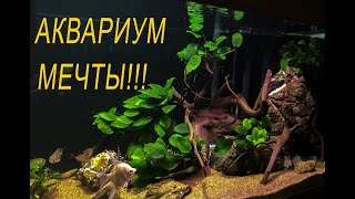 Аквариум мечты, или как я строил аквариум пол года. Трехметровый аквариум с геофагусами.