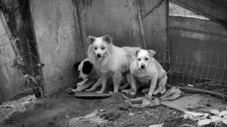 """""""Second Chance Dogs"""" - About the ASPCA Behavioral Rehabilitation Center"""