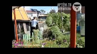 В Артеме сотрудники полиции уничтожили кусты конопли, растущие на огороде местного жителя
