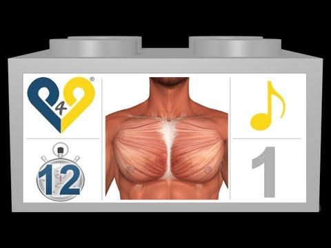 Ścięgna mięśnia czworogłowego więzadła