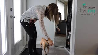 Votre chien est-il capable de contrôler ses pulsions? Voici quelques conseils futés pour les chiens