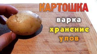 Картофель как насадка для ловли карпа