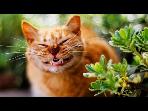 Funny Cats 🐈 Hilarious Cats Fooling Around (Full) [Funny Pets]
