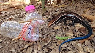 How To Make Easy Trap Lizard From Plastic Bottle