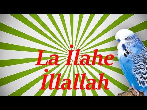 La İlahe İllallah (çocuk sesi) Papağan ve Muhabbet Kuşu Konuşturma Sesi Ses Kaydı 1 SAAT